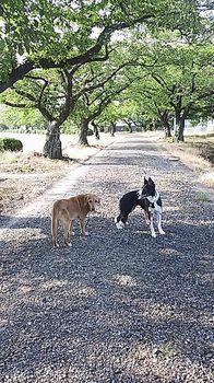 サラナビ散歩2.jpg